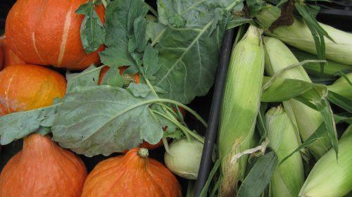 groenttorvet-d-4-august-thumbnail